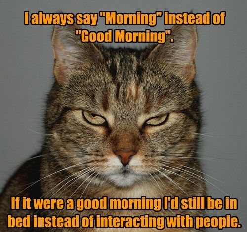 cat good morning caption
