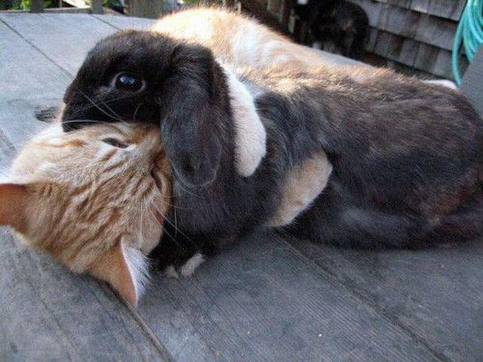 Cat Hugs Bunny