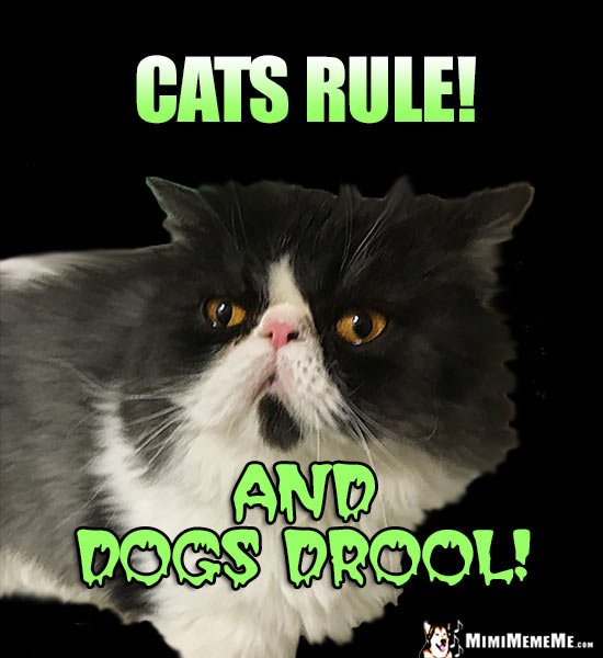Funny Cat Says Cats Rule And Dogs Drool