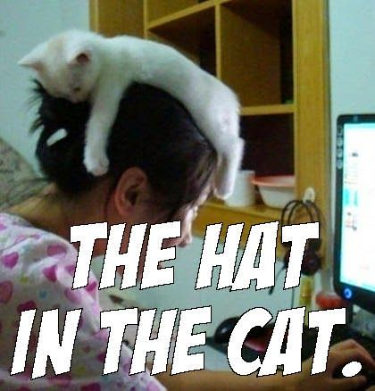 hat cat meme