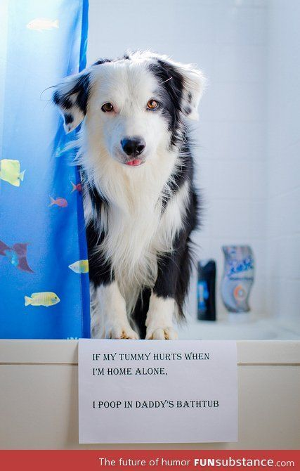 Animal Shaming has be e my favorite thing on the internet