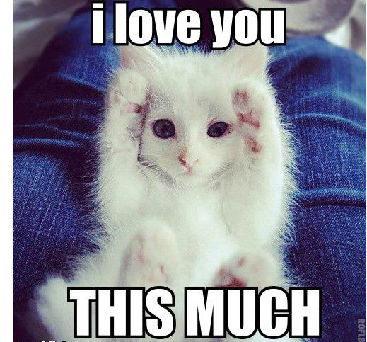 I love you cat