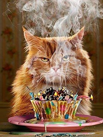 Funny Cat Cards Ginger Birthday Card Cupcake Grumpy Greeting Template