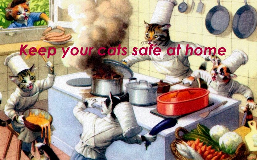 cat safety home vintage cats cooking