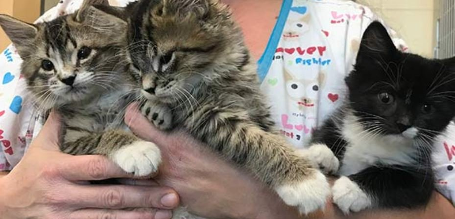 Kittens Without Eyelids to Receive Sight Saving Surgery