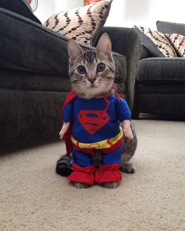 6 Supercat