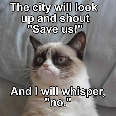 grumpy cat funny and cat image