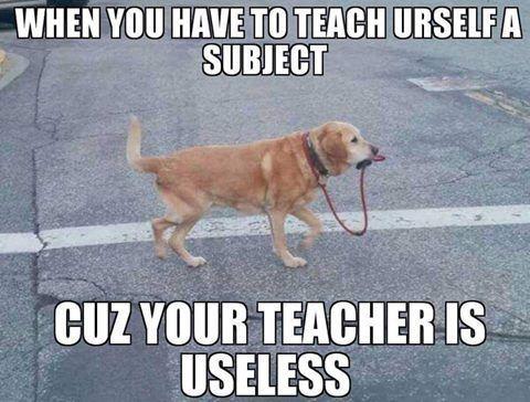 doghumor funnydogpicture dogs humor