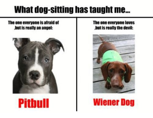 Memes Pitbull and Devil What dog sitting has taught me