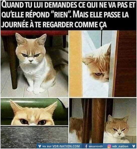 VDR from funny cat jokes source pinterest