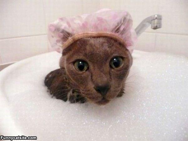 Funny Cat Bath