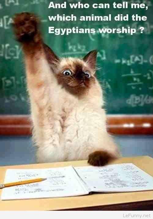 Funny cat at school