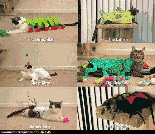 really funny puns funny puns So Much Pun The PunCat eth Puns Pinterest