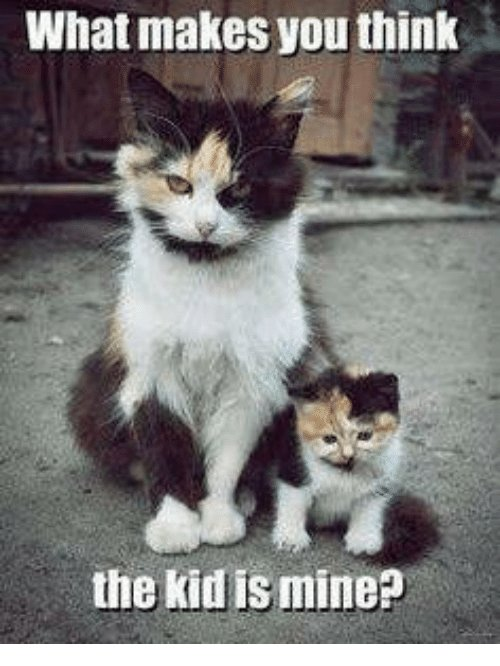 Funny Cat Memes · Grumpy Cat Mine and Kid What makes you think the kid is mine