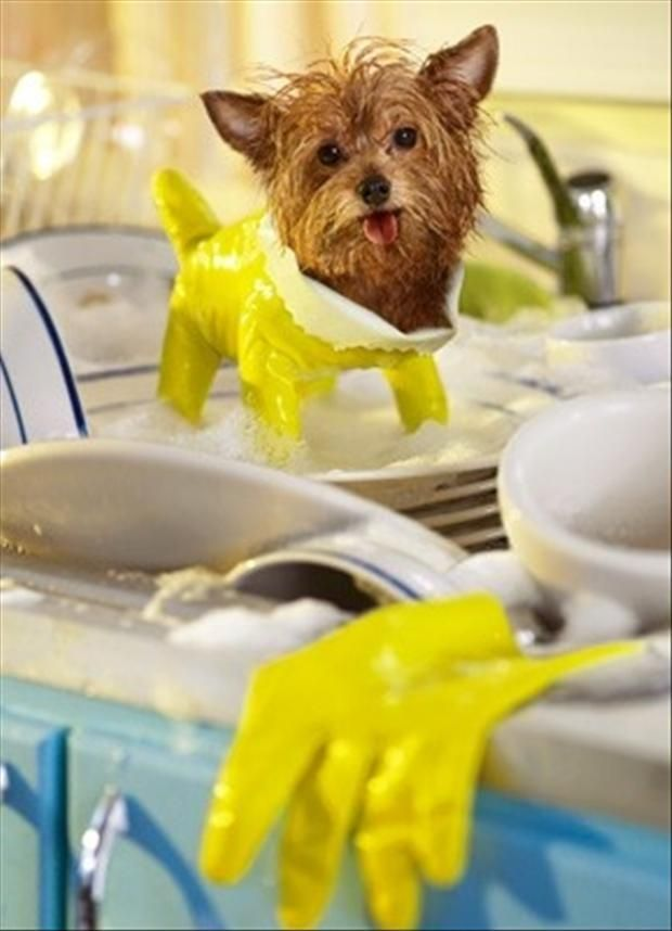 Just in case you re having a bad day here s a tiny dog wearing a dish glove AWW it reminds me of marmar she is the only person I know who has