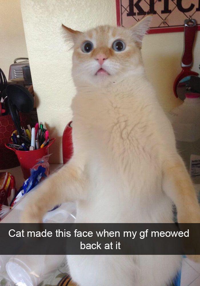 Cat Snapchat Fail