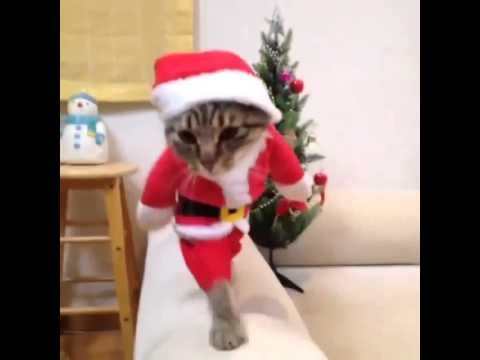 Cute cat in christmas outfit