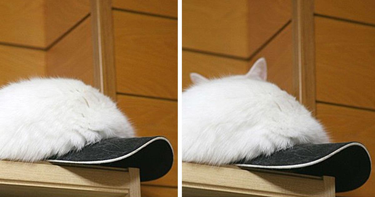 Find the Awesome Funny Cat Hiding Pictures