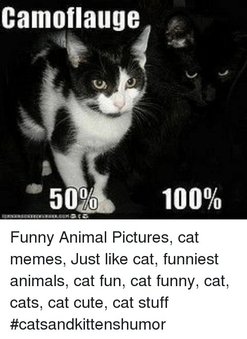 Find the Awesome Funny Hilarios Cat Memes