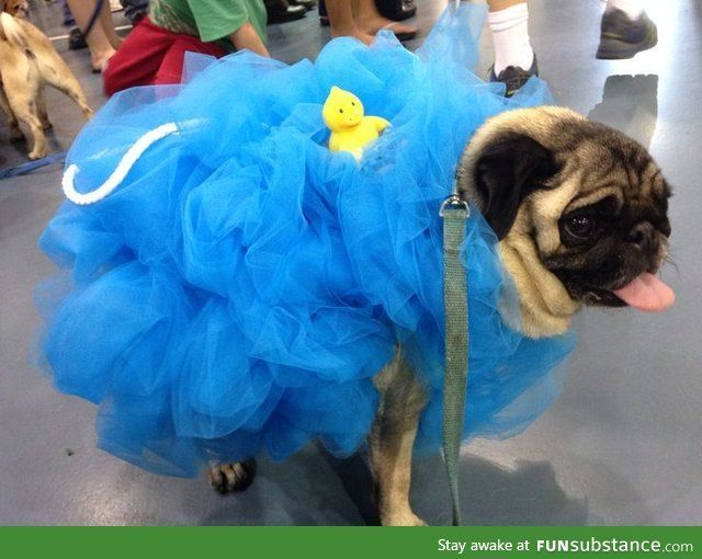 Pug Loofah Dog Costume