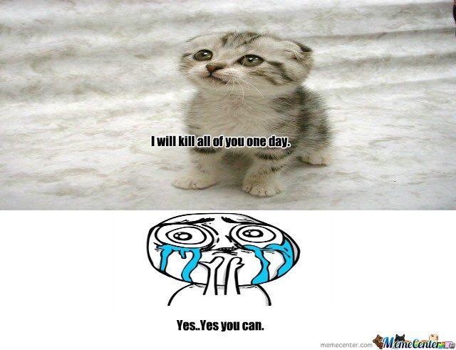 SUPER cute EVIL cat