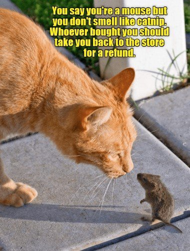Find the Beautiful Cat Mouse Pictures Funny