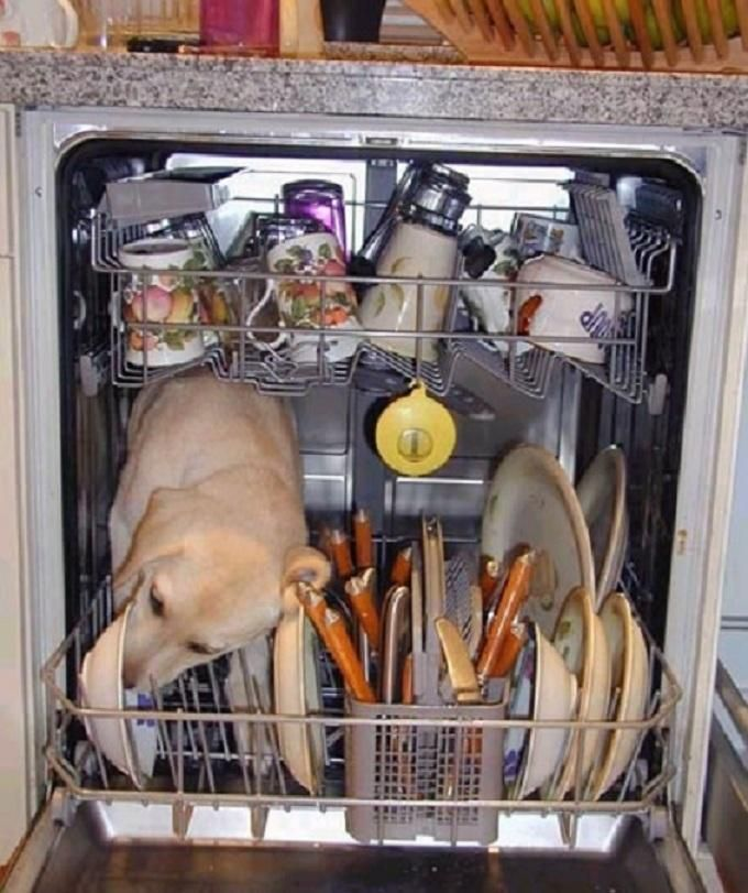 Sick of opening your dishwasher and thinking the dog could have licked those dishes cleaner It s not your dishwasher it s the detergent