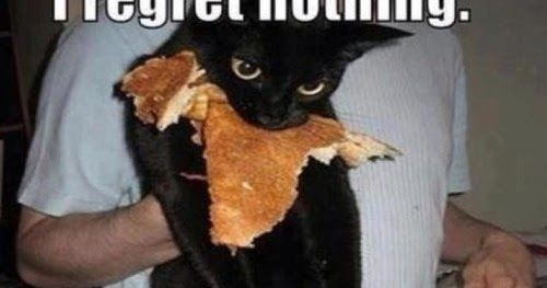 i regret nothing cats kitten kitty pic picture funny cat cute fun lovely photo images