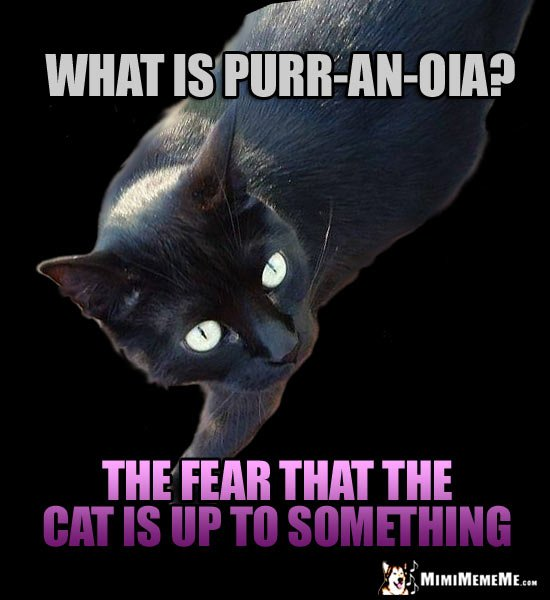 Black Cat Joke What is purr an oia The fear that the