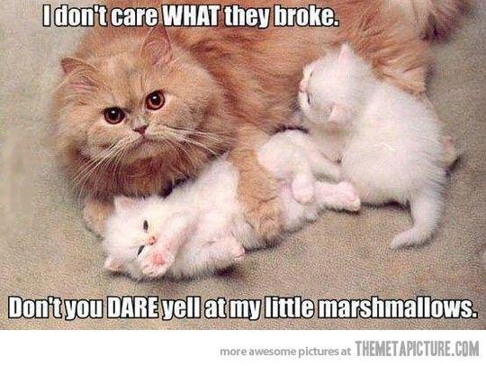 Funny Cat Pics Mama Ca and Funny Kitten Pics cat kitten funny kawaii adorable