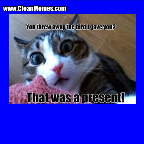 Author cleanmemesPosted on October 5 2015 Format ImageCategories Cat Memes Clean Funny Clean MemesTags Cat Memes Clean Funny