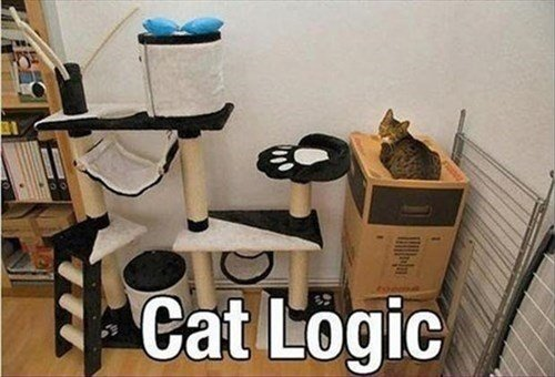 cat tree logic Cats funny
