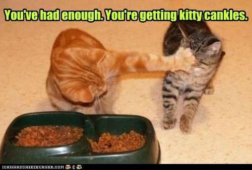 cankles captions Cats enough fat food no nom rejected