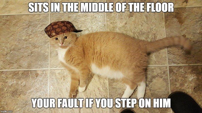 scumbag cat meme