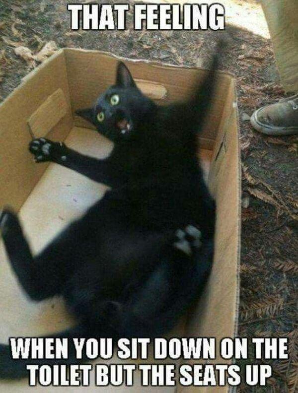 Hilarious Cat Memes 2018
