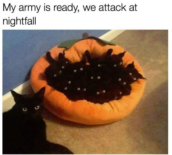 29 Animal Memes That Are Guaranteed to Make You Giggle Cute Kitten Meme Cute Cat