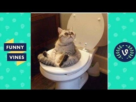 Find the Best Of Best Funny Cat Pictures Ever