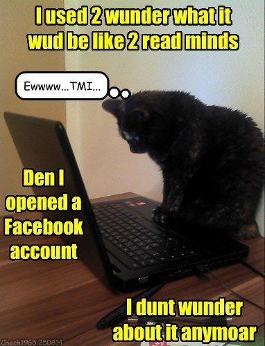 TMI Cats