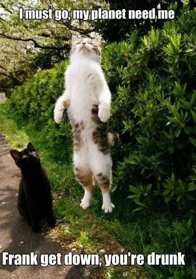 Funny Cats 2 05