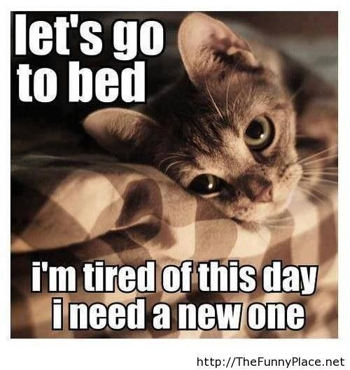 tired of this day quote funny cute cat pictures quotes sayings pics