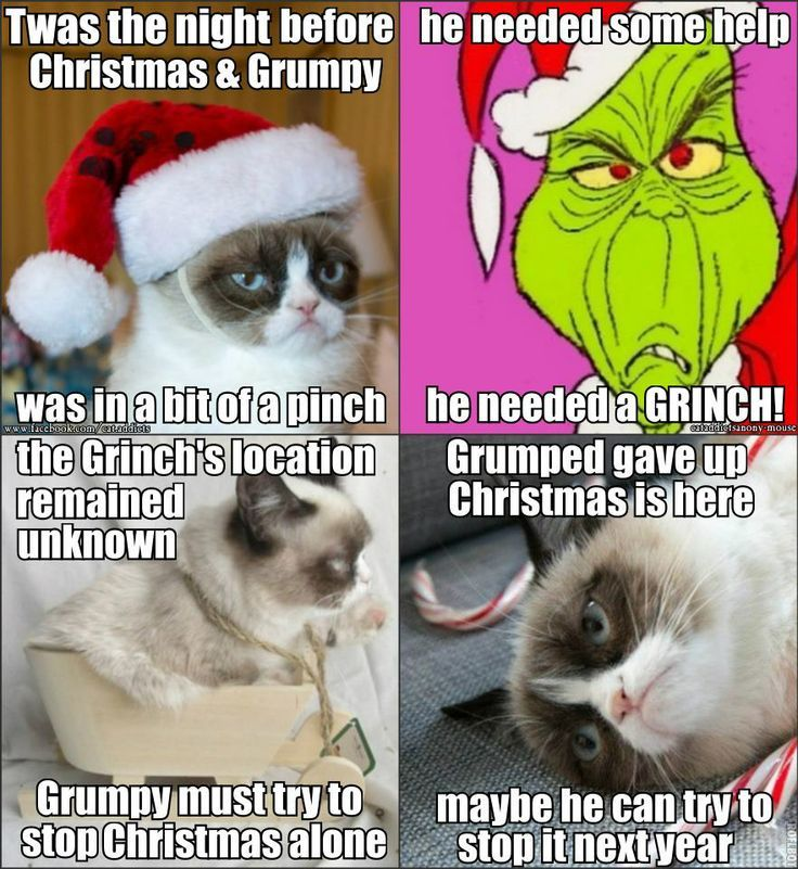 Grumpy funny christmas festival collections 736x801 Christmas pics funnypictures grumpy