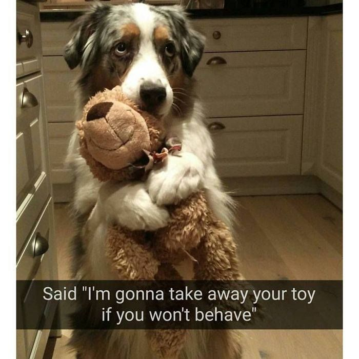 100 Happiest Dog Memes Ever That Will Make You Smile