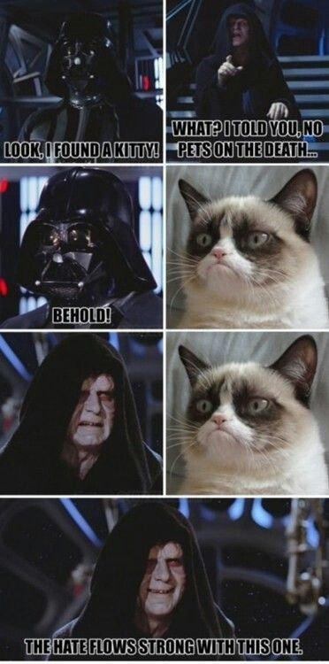 27 Grumpy Cat Funny Memes Grumpy cat Grumpy cat memes