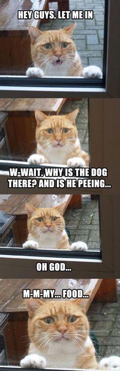 Funny Animal cat memes Just like cat funniest animals cat fun