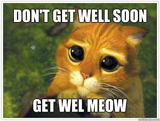 Don t Get Well Soon Get Well Meow