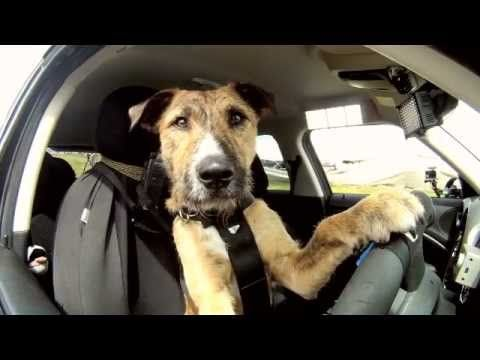 The World s First Driving Dog