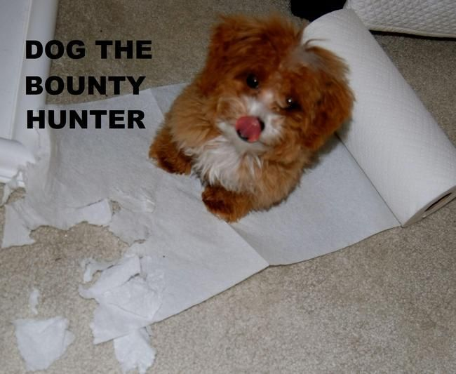 Funny pictures about Dog the Bounty Hunter Oh and cool pics about Dog the Bounty Hunter Also Dog the Bounty Hunter photos