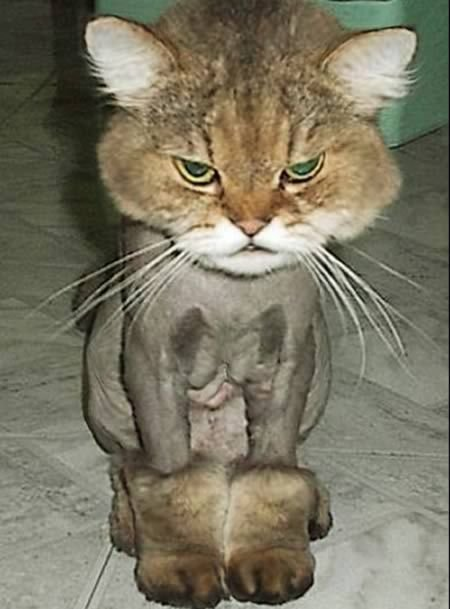 my new ugg boots Cat Haircut Funny Pick Lol Funny Funny Cats