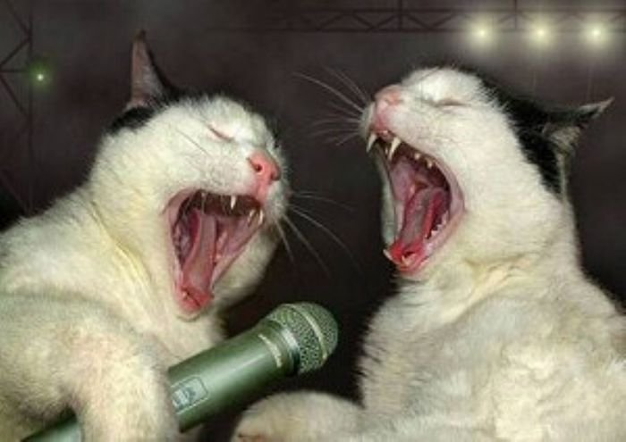 SingingCatsfunnyphotos