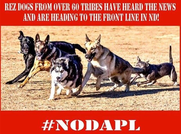 From the Keystone XL to NoDAPL – ALL The Rez Dog s are now on their way to North Dakota to protect our people from the D A P L private security s K9 units